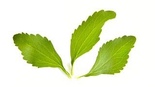 stevia-1024647__180
